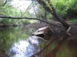 Canoe 6-6-09 018
